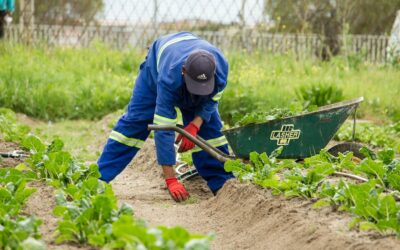 Farming Relief – Temporary Foreign Workers Exempt from COVID-19 Travel Restrictions
